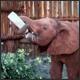 Random Tangent – African Safari Edition!