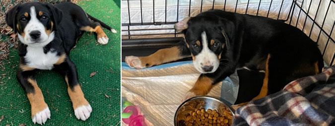 Rebecca's newest puppy addition, Terra